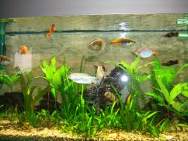 Foto 2 Aquarium mit co2 Anlage
