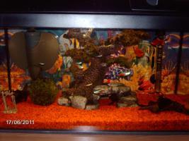 Aquarium inklusive Zubehör und Fische