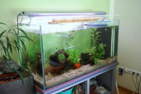 Foto 3 Aquarium kommplett