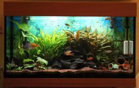 Foto 2 Aquarium komplett 125l