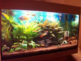 Foto 3 Aquarium komplett 125l