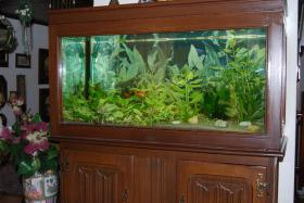 Aquarium komplett mit Zubehör :