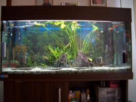 Aquarium mp Jägeranlage