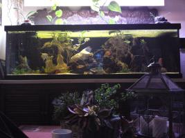 Aquarium / Becken 840l mit Zubehör ohne Fische