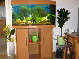Aquariumfreunde aufgepasst !