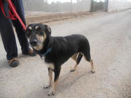 Foto 4 Arabella möchte nicht im Tierheim sterben