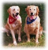 Arbeiten Sie gerne mit Hunden?Fernstudium z. Hundetrainer!