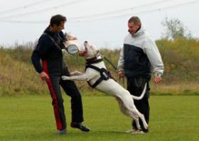Foto 5 Argentinische Dogge - exklusive Welpen