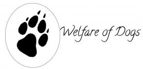 Foto 2 Artgerechtes Hundefutter in Lebensmittelqualität