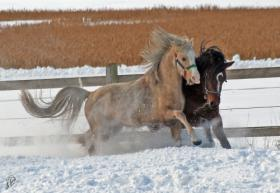 Foto 3 Aufzuchtplatz für 2 Hengstfohlen Pony oder Kleinpferd