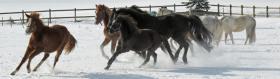 Foto 6 Aufzuchtplatz für 2 Hengstfohlen Pony oder Kleinpferd
