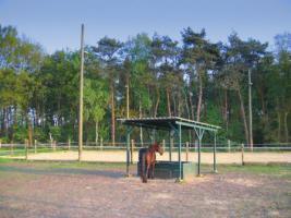 Foto 2 Aufzuchtplatz für Hengstfohlen frei