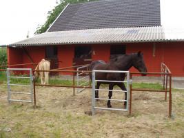 Foto 3 Aufzuchtplatz für Hengstfohlen frei
