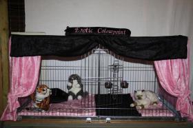 Ausstellungsdeko, Käfigdeko, Quickdeko, Doppelkäfig, Einzelkäfig, Katzenspieleparadies