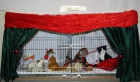 Foto 2 Ausstellungsdeko, Käfigdeko, Quickdeko, Doppelkäfig, Einzelkäfig, Katzenspieleparadies