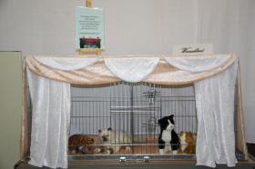 Foto 3 Ausstellungsdeko, Käfigdeko, Quickdeko, Doppelkäfig, Einzelkäfig, Katzenspieleparadies