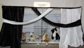Foto 4 Ausstellungsdeko, Käfigdeko, Quickdeko, Doppelkäfig, Einzelkäfig, Katzenspieleparadies