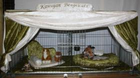 Foto 7 Ausstellungsdeko, Käfigdeko, Quickdeko, Doppelkäfig, Einzelkäfig, Katzenspieleparadies