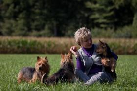 Foto 5 Australian Terrier Jumpers erwarten für November Welpen