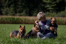 Foto 10 Australian Terrier Jumpers erwarten für November Welpen