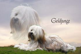 Foto 3 Autoaufkleber vom Bild Ihres Hundes