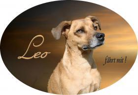 Foto 6 Autoaufkleber vom Bild Ihres Hundes