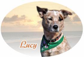 Foto 3 Autoaufkleber und Schilder vom eigenen Hund