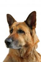 Foto 4 Autoaufkleber und Schilder vom eigenen Hund