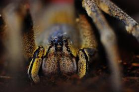[B/T] div. Vogelspinnen, andere Spinnen, etc.