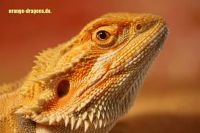 Foto 2 BArtagame ORANGE DRAGONS Hypo Red Citrus (clear nails),
