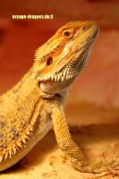 Foto 3 BArtagame ORANGE DRAGONS Hypo Red Citrus (clear nails),