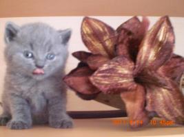 Foto 2 BHK Kitten