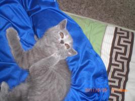 Foto 3 BHK Kitten