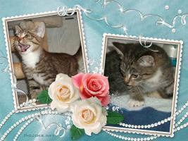 Foto 5 BILDSCHÖNE HAUSKATZEN BABYs suchen tollen Platz! Katze