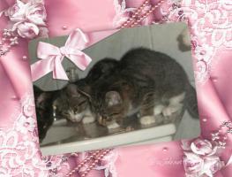 Foto 10 BILDSCHÖNE HAUSKATZEN BABYs suchen tollen Platz! Katze