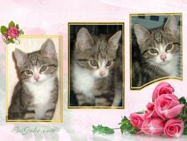 Foto 11 BILDSCHÖNE HAUSKATZEN BABYs suchen tollen Platz! Katze