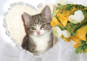 Foto 15 BILDSCHÖNE HAUSKATZEN BABYs suchen tollen Platz! Katze