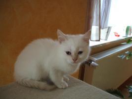 Foto 3 BKH-BLH Kitten Point