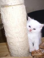 Foto 2 BKH-BLH Kitten Point