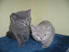 Foto 2 BKH Baby in  blau