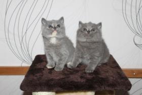 Foto 2 BKH Babys mit Staumbaum