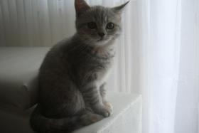 Foto 6 BKH-Kätzchen