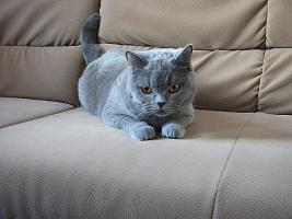 Foto 2 BKH Katze