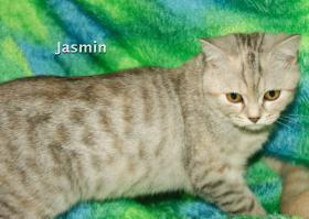 Foto 2 BKH Katze, 5 Monaten alt