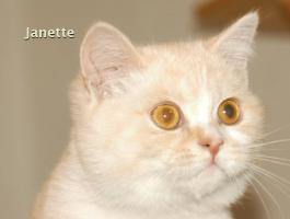 Foto 3 BKH Katze, 5 Monaten alt