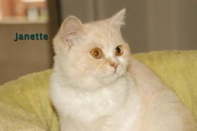 Foto 4 BKH Katze, 5 Monaten alt