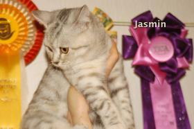 Foto 5 BKH Katze, 5 Monaten alt