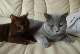 Foto 4 BKH Katzen