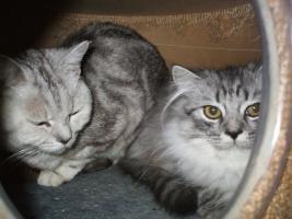 Foto 2 BKH Katzen