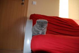 Foto 2 BKH Katzen Suchen Dich....
